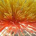 wiosenne porządki #kolce #żółty #czerwony