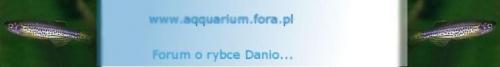 Forum www.aqquarium.fora.pl Strona Główna