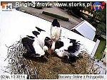 http://images26.fotosik.pl/14/30980cc43ef0e59em.jpg