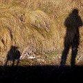 pies rusza #pies #natura #cień