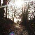 #las #ścieżka #natura #przyroda