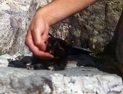 Ten znaleziony w Poćitelj (niedaleko Mostaru), w krzakach był pierwszy z najpierwszych... Został w Mośćenićkiej Dradze