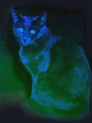 Szymon baaaaardzo Blue