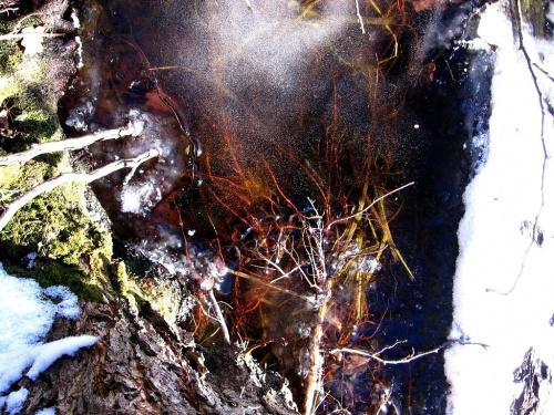 #zima #luty #przyroda #natura #lód