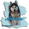 Mój Pies Adonis. 1 rok i 2 miesiące. #Mój #Pies #Adonis #miesiąc