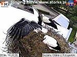 http://images26.fotosik.pl/17/5e31aa5d816d0f54m.jpg