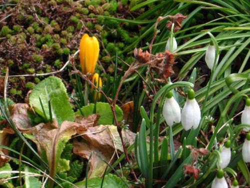 na spacerze... #wiosna #kwiaty #przyroda