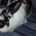 Trusia #królik #króliczek