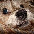 To mi się podoba najbardziej... #pies #piesek #pieseczek #piesio #zwierzęta #kudłaty #pikuś