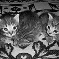 #kotki #małe