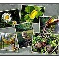 W parku miejskim, roślinki budzą się do życia od nowa! #collage #wiosna #roślinki #pączki #NoweŻycie