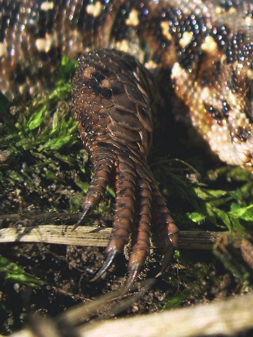 poproszę ładne tipsy, może serduszka... słonko... albo mogą być gwiazdki :) #jaszczurka #nauka