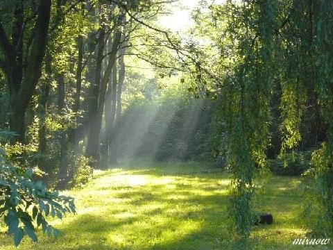 #światło #promień #park #drzewa