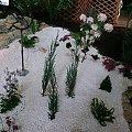 #kwiaty #WystawaKwiatów #piękne