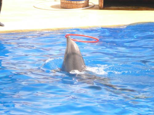Pokaz delfinów #Marineland