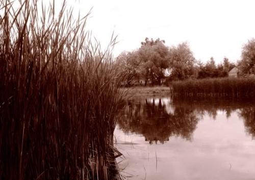 #jezioro #natura