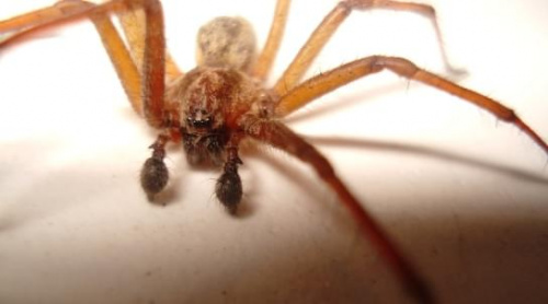 #owady #pająk #pająki