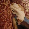 #kot #łóżko #lenistwo #leń #śpioch #pokój