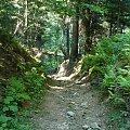 Droga na Łopień #droga #ścieżka #las #góry