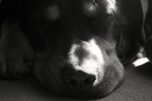 śpi Arni
