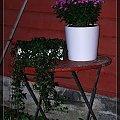 #Hamar #Norwegia #Kwiaty