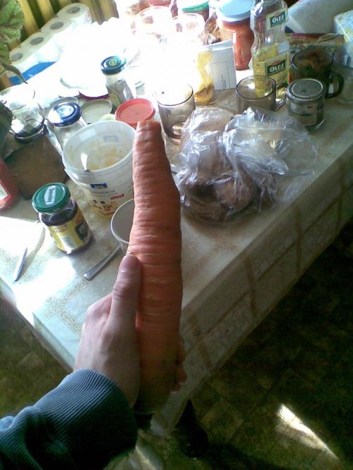Taaaaaaaaakie marchewki choduje moja babcia, Na naturalnym nawozie z kurzego gnoju :]