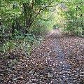 tunel z jesieni #Puszcza #jesień