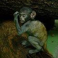 myślę więc jestem :D #małpka #zwierzęta #zoo #wrocław