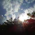 Widoczek :) #przyroda #widoczek #widok #niebo #słońce #drzewa