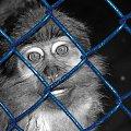 wolności... #zwierzęta #małpka #natura #kraty #więzienie #ciekawe