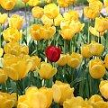 Opozycja #Kwiaty #barwy #kontrast