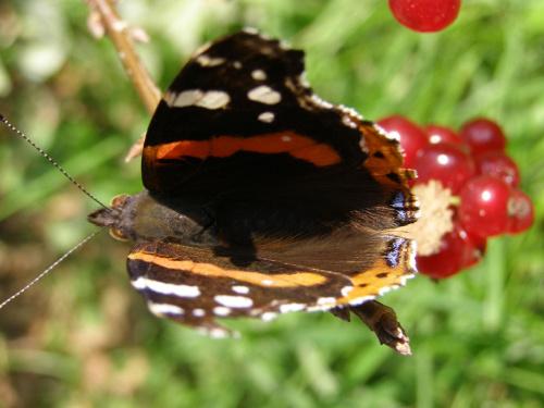 Motyl :-) #motyl #owad