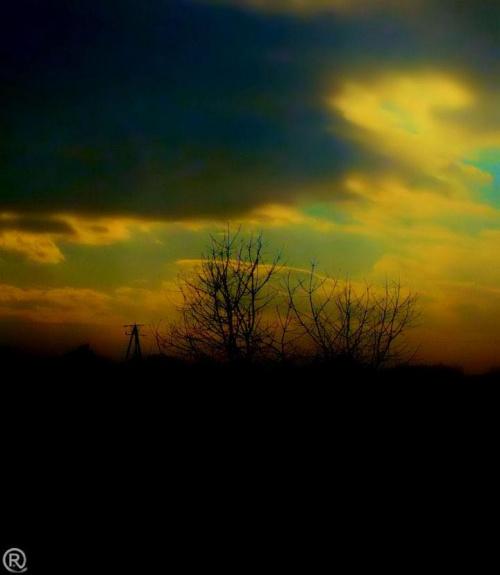 drzewko #widok #efekt #kolory #wyostrzanie #corel #zdjęcie #fotografia #grafika #efekty #obróbka #zamazywanie #kolor #czarny #biały #ZKolorowym #element #drzewo #przyroda #czeresnia