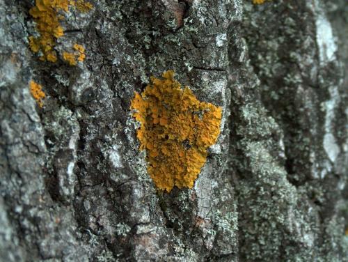 poroscik na korze drzewa