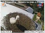 http://images26.fotosik.pl/45/532b2fc71a23683em.jpg