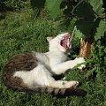 Cały on #Kot #koty #zwierzęta #ciekawe #śmieszne #zabawne #fajne #humor