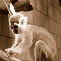#zwierzęta #małpa #małpka