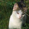 Cały on #Kot #koty #zwierzęta #ciekawe #śmieszne #zabawne #fajne