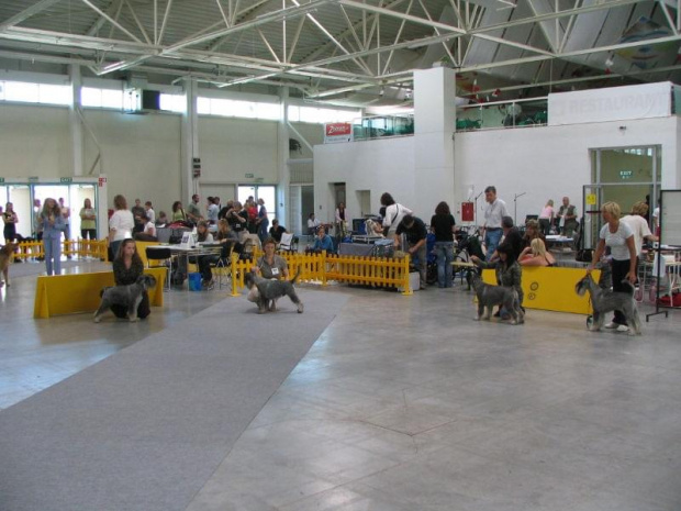 Psy- porównanie o CACIB