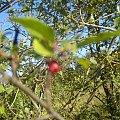 #owoc #drzewo #gałęzie