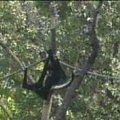 Małpka #małpa