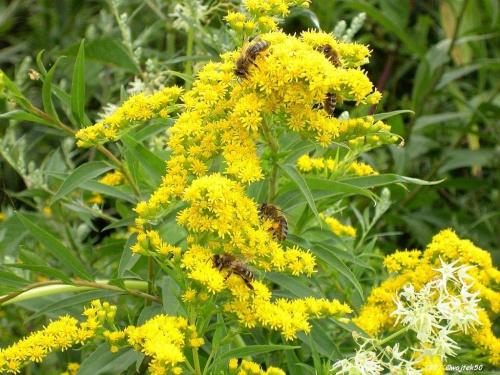 ...praca wre ... #lato #pszczoły