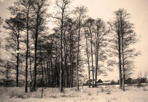 #las #lasek #drzewa